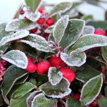 Winterfeste Balkonpflanzen sparen Zeit und Geld
